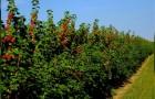 Planta un arbusto mas bien que construir un recinto: estos son los beneficios que no te esperas