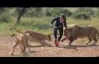 Playing football with lions!