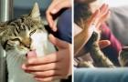 10 comportamenti con cui il gatto ti sta comunicando che ti ama... anche se non te ne rendi conto