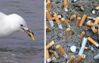 Sigarettenpeuken zijn de grootste bron van vervuiling voor oceanen