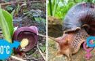 La nature ne cesse de surprendre : voici 10 faits curieux que peu de gens connaissent