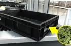 Le cassette del controllo bagagli dell'aeroporto contengono più batteri di un gabinetto