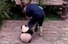 Veja por que trabalhar cuidando de pandas é o melhor trabalho do mundo!