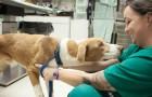 Les vétérinaires révèlent ce que fait un animal dans ses derniers instants de vie... et quelle est l'erreur la plus fréquente commise par l'homme