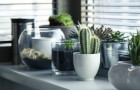 Le 3 piante che secondo la tradizione cinese ognuno di noi dovrebbe avere dentro casa