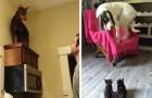 10 divertidas imagenes de perros aterrorizados de alguna cosa RIDICULA