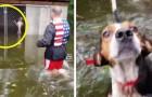 Ils ont laissé leurs chiens dans des cages pendant l'ouragan Florence : quelques volontaires reviennent pour les sauver.