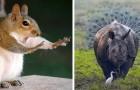 Die 15 lustigsten Tierfotos von 2018: Hier ist die lustigste Seite der Natur für dich.