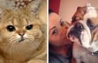 27 esilaranti animali che odiano i selfie ma alla fine vengono ugualmente adorabili