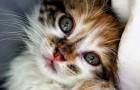 Adoptar un gato alarga la vida: combate la depresion y hace bien al corazon