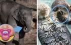 14 kuriose Fakten über die Tierwelt, von denen du wahrscheinlich nichts wusstest.