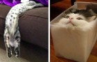 Queste 20 divertenti immagini dimostrano che i gatti sono fatti di materiale liquido