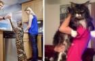 Le 6 razze di gatti più grandi al mondo di cui vi innamorerete