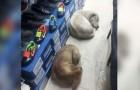 Un negocio de zapatos ha abierto las puertas a los perros callejeros para protegerlos del frio y de la lluvia