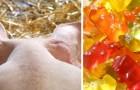 Quando vedrete come vengono prodotte le caramelle gommose non ne mangerete più: ecco il video