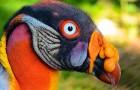 10 real existierende Vögel, die von einem anderen Planeten zu kommen scheinen.
