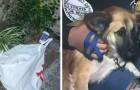 Un cane trova una busta ed attira l'attenzione dei suoi padroni: così salverà una vita innocente