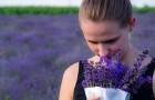 La lavande est le parfum qui réduit l'anxiété : des chercheurs japonais le découvrent