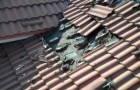 a roof full of bats