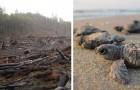 Dal 1970 ad oggi l'uomo ha spazzato via il 60% degli animali selvatici: lo afferma un report del 2018