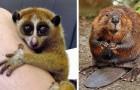 15 soorten dieren die erg lief lijken... maar in werkelijkheid extreem gevaarlijk zijn