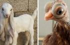 20 foto di animali che non avresti mai pensato potessero esistere