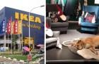 Il negozio IKEA di Catania apre le porte ai cani randagi per farli riparare durante il maltempo