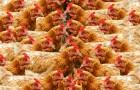La Californie signe la fin de l'élevage en cage : est-ce le début de la révolution ?