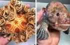 Un pêcheur russe montre les poissons les plus étranges des profondeurs de l'océan : voici les dernières photos qu'il a publiées