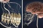20 immagini al microscopio che ci mostrano il corpo umano meglio di qualsiasi libro scolastico