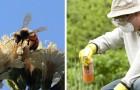 Un nuovo studio conferma che il glifosato sta contribuendo all'estinzione delle api