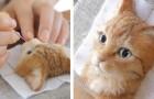 Questa ragazza realizza ritratti di gatti con la lana, e il risultato sembra prendere vita da un momento all'altro