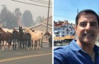 Video Video's  Paarden Paarden