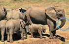Video Video's met Olifanten Olifanten