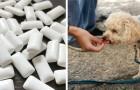 Getötet von Xylitol: Die Geschichte dieses kleinen Hundes warnt uns vor der Gefahr dieses Inhaltsstoffs