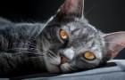 Katternas magi, en energi som omsluter och skyddar även deras ägare