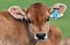 Ein geringerer Fleischkonsum hat seit 2007 eine halbe Milliarde Tiere pro Jahr gerettet