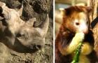Estinzione incontrollata: tutte le specie a cui abbiamo detto addio dal 2000 ad oggi