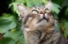 Die Wissenschaft bestätigt: Hunde und Katzen können Frequenzen sehen, die für uns unsichtbar sind