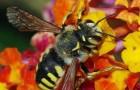 La Francia è il primo paese a bandire i cinque pesticidi responsabili della scomparsa delle api