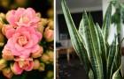 Les 10 plantes d'intérieur qui contribuent à maintenir un microclimat optimal