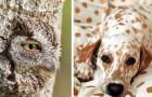 24 plaatjes van gecamoufleerde dieren die je nauwelijks kunt zien