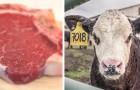 Mangiare meno carne è la migliore cosa che si può fare per salvare il pianeta nel 2019