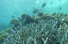 Gli oceani si scaldano più velocemente del previsto: aspettiamoci inondazioni e uragani più violenti