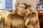 Il declino inarrestabile del mercato delle pellicce: chiuso un altro allevamento nel nord Italia