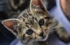 Wenn Sie denken, dass Katzen ungesellig sind, ist es wahrscheinlich, dass Sie ein schlechter Mensch sind: So sieht es die Wissenschaft