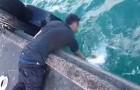 Cattura un pesce enorme senza canna da pesca