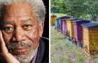 Morgan Freeman a créé un refuge pour les abeilles dans son ranch, pour lutter contre leur disparition