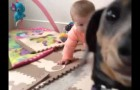 Cane geloso vuole essere al centro dell'attenzione