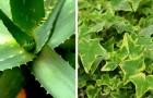 Ecco le 7 piante che devi avere in casa per ripulire le tossine e fare il pieno di ossigeno
